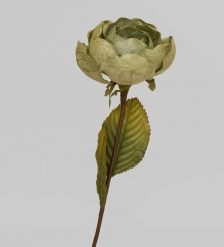 TRN 236 Роза
