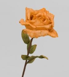 TRN 210 Роза