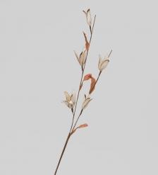 TR 398 Африканский тюльпан