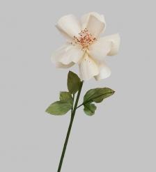 TR 404 Китайская роза