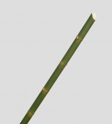 TR 625 Бамбук