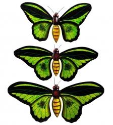 46-005 Панно  Бабочки   о.Бали